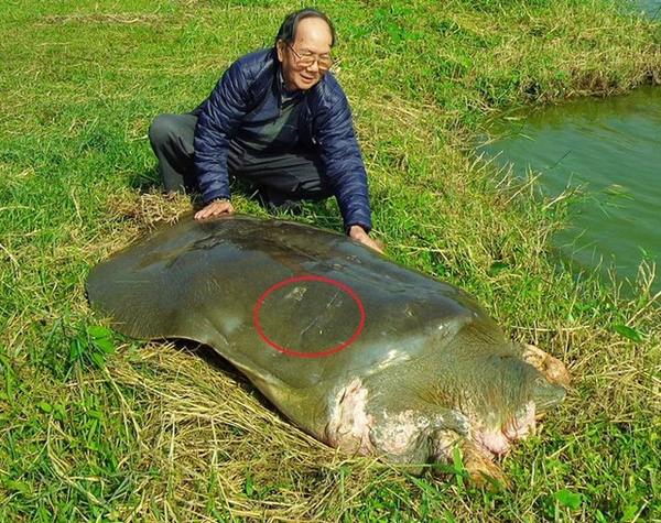 xác nhận cụ rùa hồ Hoàn Kiếm (hồ Gươm) đã chết vào khoảng 16g30